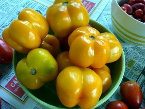 Sementes de Tomate Yellow Stuffer: 20 Sementes