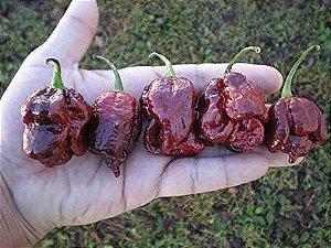Sementes de Trinidad Scorpion Chocolate: 10 Sementes