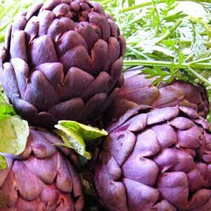 Sementes de Alcachofra Violeta: 10 Sementes