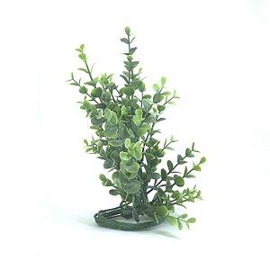 Planta Eucalipto Fosco - P
