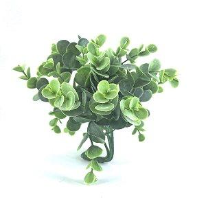 Planta Eucalipto Largo M