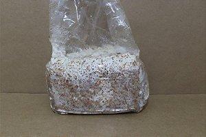 Semente de Cogumelo Shiitake para Cultivo em Toras - Pequenas Quantidades