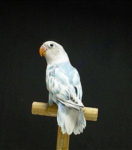 Personata Arlequim Azul