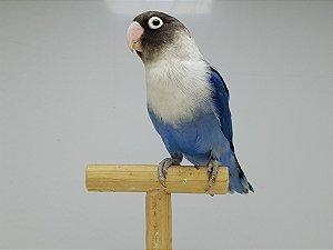 Personata Azul Cobalto