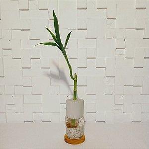 Vidro em cimento com bambu da sorte