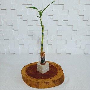 Bambu da sorte  com suporte rústico