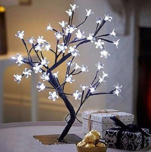 Cerejeira Decorativa - WINCY