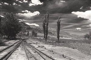 Foto 79 - Filadélfia Cactus - Argentina 01