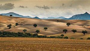 foto 83 -   Felipe Aguillar Andaluzia - Espanha