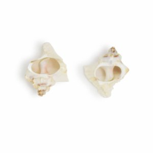 Conjunto de 2 Anéis para Guardanapos Shell