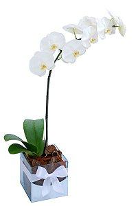 Orquídea Branca GG