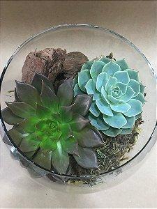 Vaso de vidro com 2 Suculentas