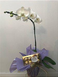Orquídeas Phalaenopsis M com Ferreor Rocher