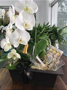 Orquídea Phalaenopsis, com Ferrero e espumante