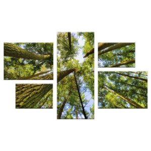 Quadro Floresta Conjunto Assimétrico Tela Decorativa em Canvas