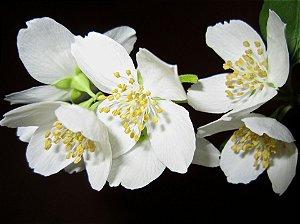 Perfume para Ambiente Home Spray Ekomist Alecrim Blanc - 1L