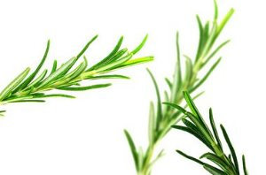 Perfume para Ambiente Home Spray Ekomist Alecrim