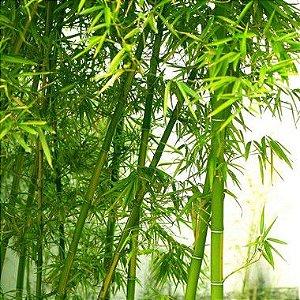Perfume para Ambiente Home Spray Ekomist Bambu