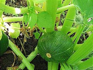 Moranguinha verde baby - KG