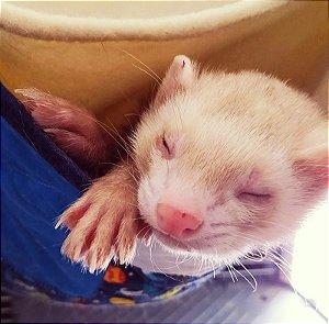 Rede Patch Block - para ferrets