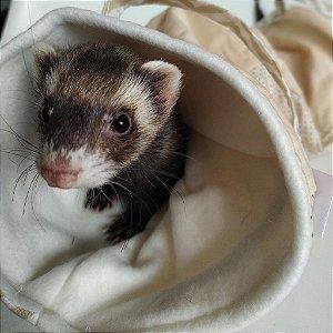 Toca Through - para ferrets