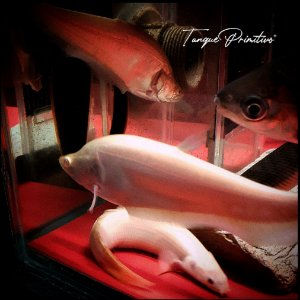 Peixe Faca Albino Ghost (Chitala Ornata) - TAMANHO: 16cm