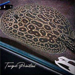 Peixe Arraia Pearl/Pérola/Jabuti (Potamotrygon Jabuti): TAMANHO 25cm de disco