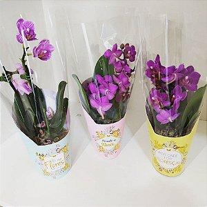 Orquídeas Baby