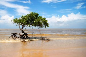 "FOTOGRAFIA 01 - ""Mangue Beach"""