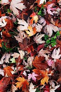 """FOTOGRAFIA 26 - """"Outono"""""""