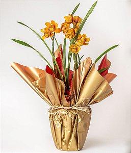 Orquídea Cymbidium Amarela