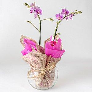 Mini Orquídea cor de Rosa