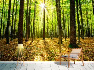 Papel de Parede Fotográfico - Floresta de outono - PA106