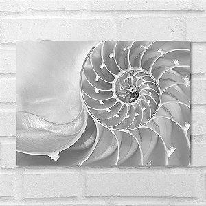 Placa Decorativa - Concha de Nautilus