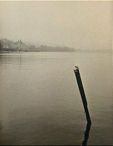 JEAN LECOCQ - Fotógrafo Premiado - Fotografia Original , Pássaro Solitário no Lago de Veneza - 39x30cm