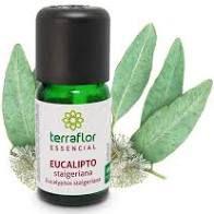 Óleo Essencial de Eucalipto Staigeriana 10ml | Terra Flor