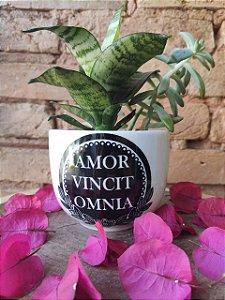 """Vaso M """" Amor Vincit Omnia"""""""
