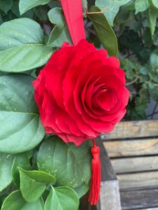 Rosa de madeira vermelha