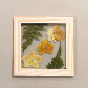 Quadro de flores naturais - trio de Orquídeas amarelas