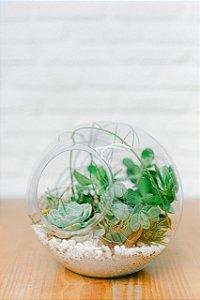 Terrário em aquário de vidro