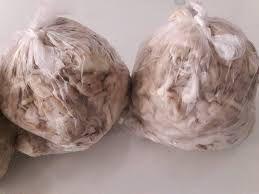 Shimeji Branco - 1 kg