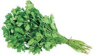 Coentro (cheiro verde)