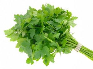 Salsa (cheiro verde)