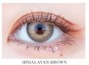 Himalaya Brown