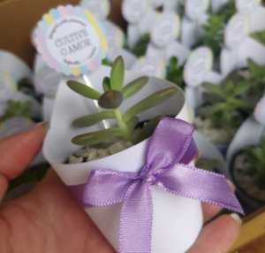 Suculentas personalizadas pote 6  -  50 unidades - papel branco - com laço de setim