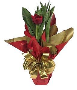 Tulipa Vermelha Natural