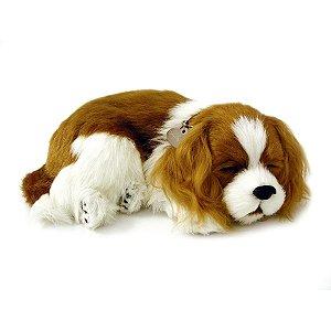 Perfect Petzzz Filhote Cachorro Cavalier King Charles Imex