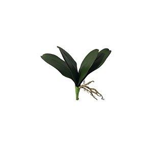 Folha de Orquidea SY01500