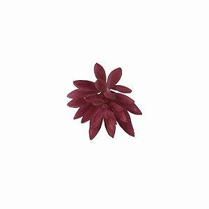 Suculenta Rebeca