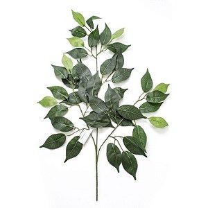 Folha de Ficus Varigata